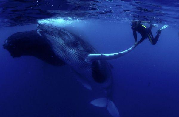 Sur le dos des baleines - Le FIFO chez vous - Vendredi 05 février à 21h40 sur Polynésie 1ère