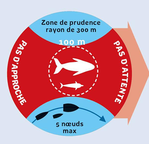 Zone de prudence (Baleines)