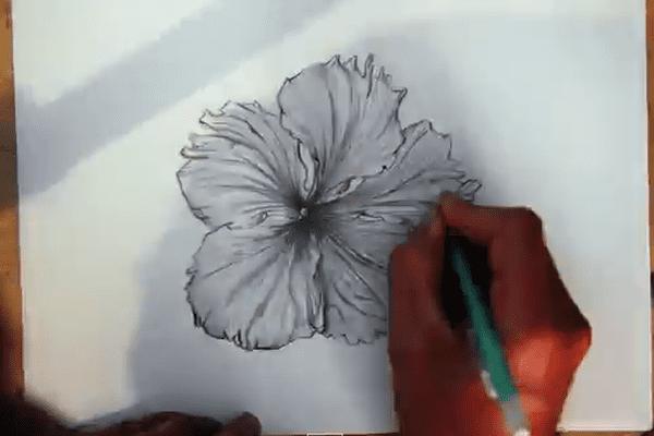 Nyko PK16 - Hibiscus