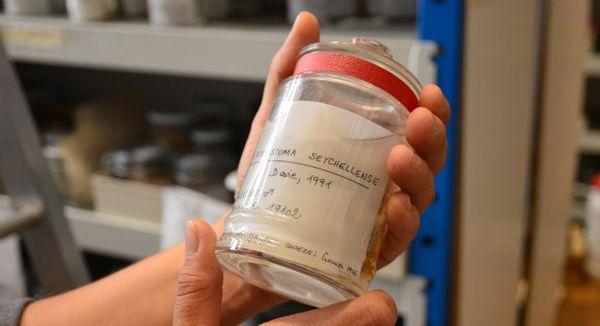 crustacés muséum national histoire naturelle