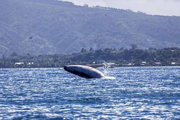 Baleine Vairao 2
