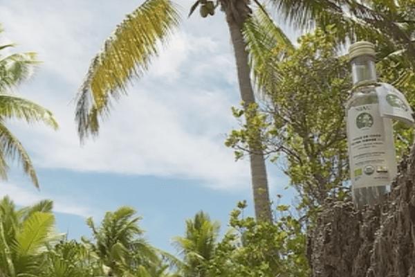 Huilerie vierge de coco de Niau