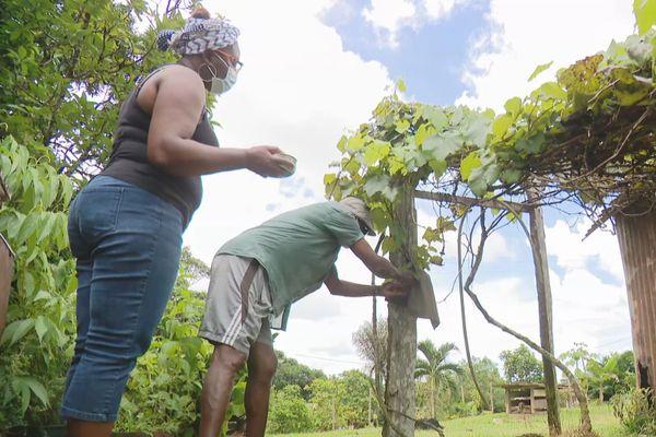 Un raisin cultivé depuis des années au quartier Vampires