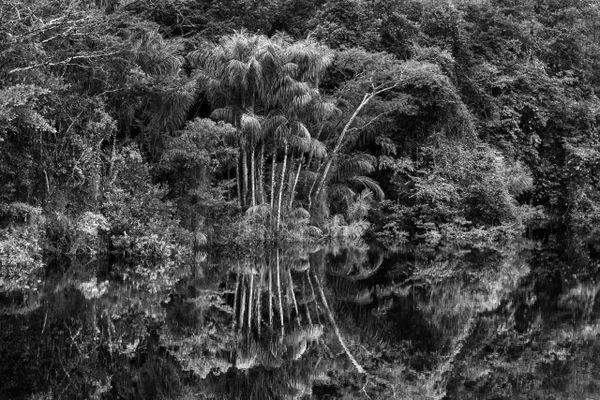 Rio Jau Etat d'Amazonas Salgado