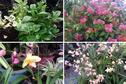 8e édition des Floralies de Polynésie