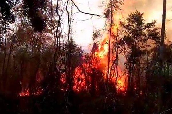 "Incendie dans le Parc national d""Ankarafabntsiraka à Madagascar"