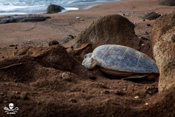 tortue mayotte