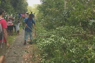 Forêt de Douville à Goyave