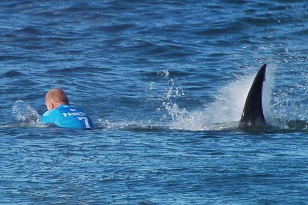 Attaque de requins