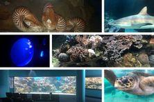 En passant par l'aquarium des Lagons, le 26 octobre.
