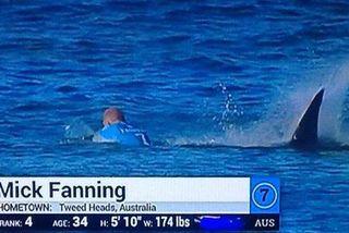 Shark Attack On Fanning