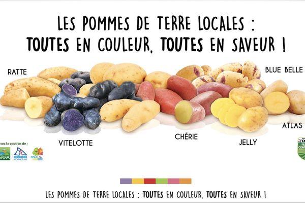 Pommes de terre OCEF