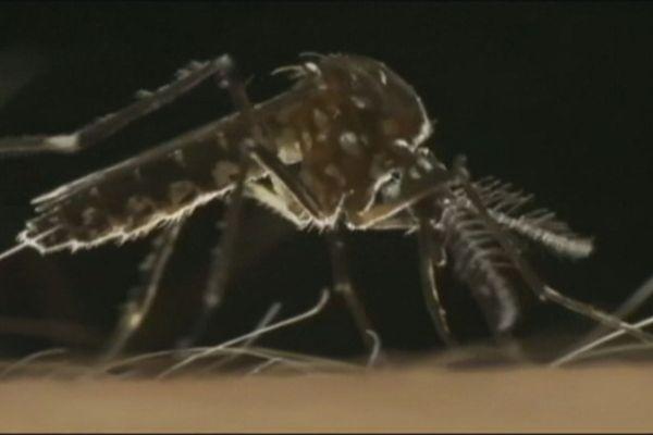 Dengue moustique