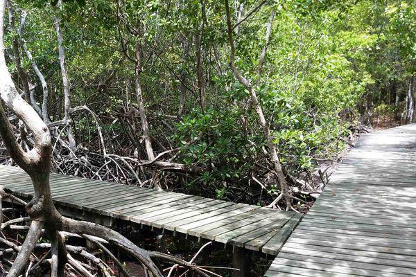 Sentier sportif dans la Mangrove au Lamentin en Martinique