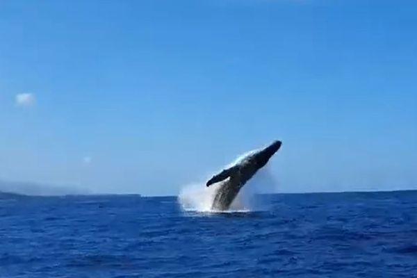 baleine saut large de Saint-Gilles 150921