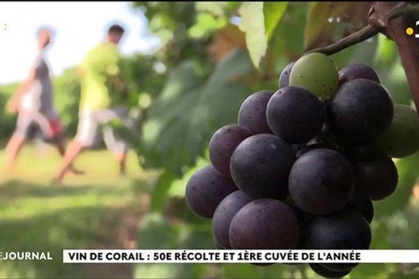 50e récolte pour les vignes de Rangiroa