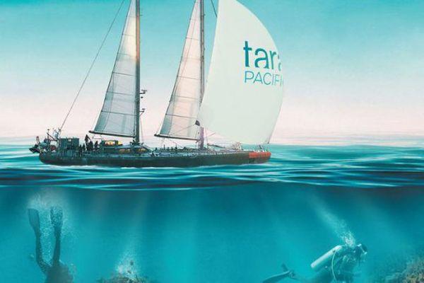 Tara, l'odyssée du corail
