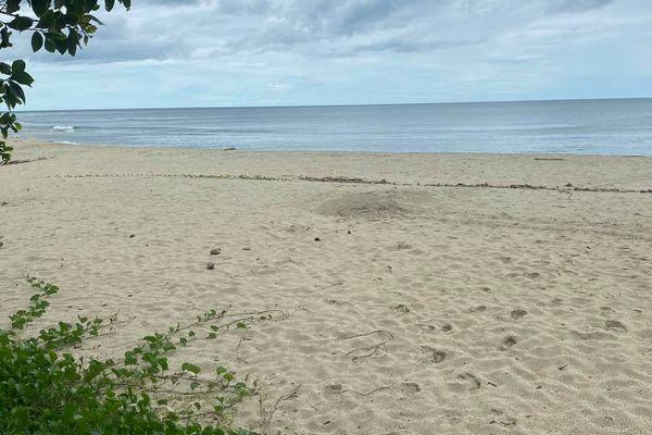 Nid de tortue sur la plage de Tiéti