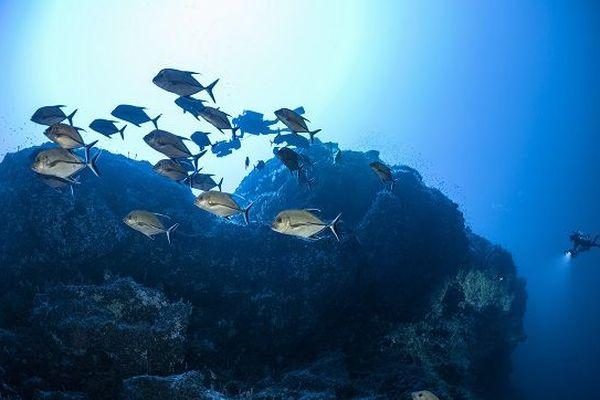 Les fonds marins du Mont La Pérouse