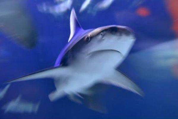 attaque requin byron bay