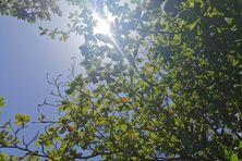 Ciel bleu et soleil en Martinique.