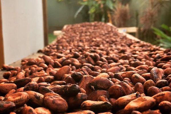 cacao tahiti /