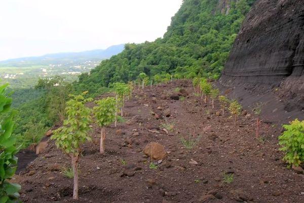 replantation végétale des carrières