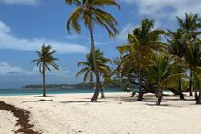 Des plages qui risquent de baigner dans le silence en attendant des jours meilleurs