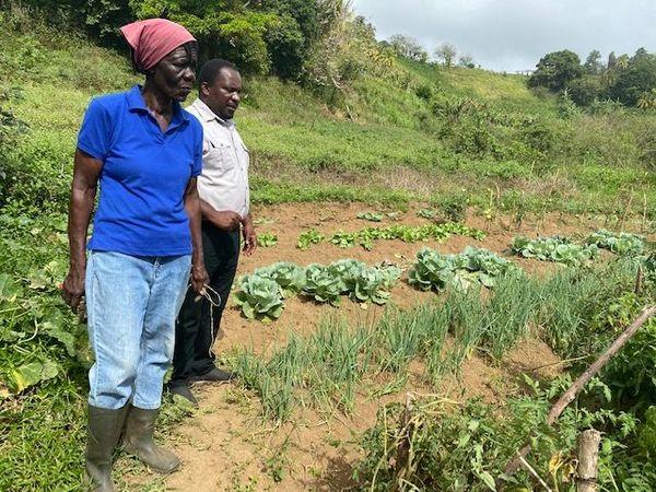 Agriculture St. Vincent et les Grenadines