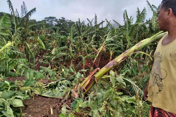 Plantations inondées paita