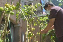 Un jardinier amateur durant le reconfinement.