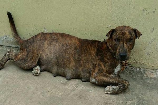 intempéries: les chiens sont abandonnés
