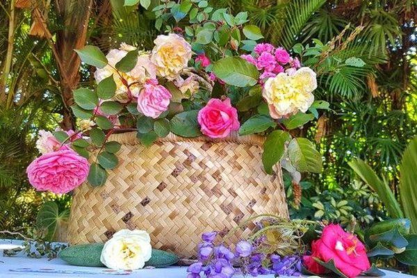 Roses de la Réunion