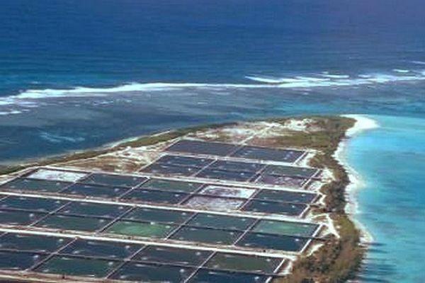 Coëtivy aquaculture 2013