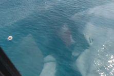 Un requin sort la gueule de l'eau lors du passage d'un hélicoptère à basse altitude près de l'îlot M'ba le 7 mai 2021.