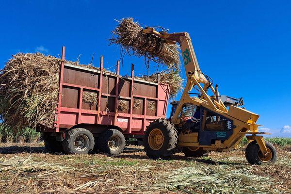 Campagne sucrière tracteur canne champs
