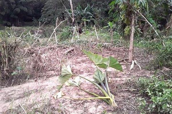 Dégât dans un champ après la pluie diluvienne du 20 avril 2020
