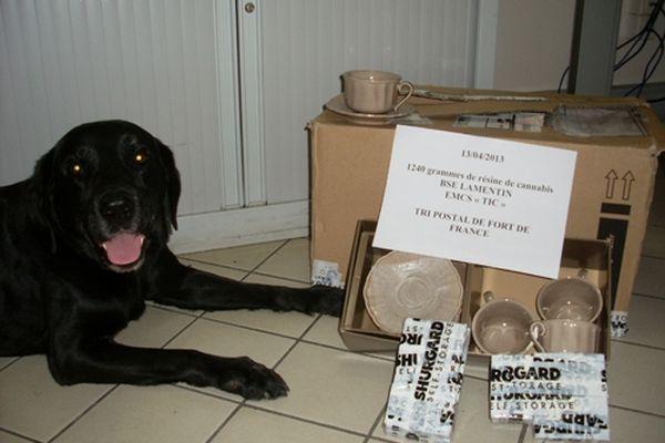 Le chien TIC