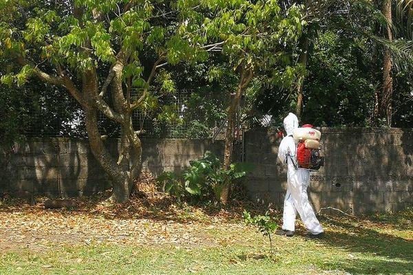 Les agents de la lutte anti-vectorielle luttent contre les moustiques et la circulation du virus de la dengue.