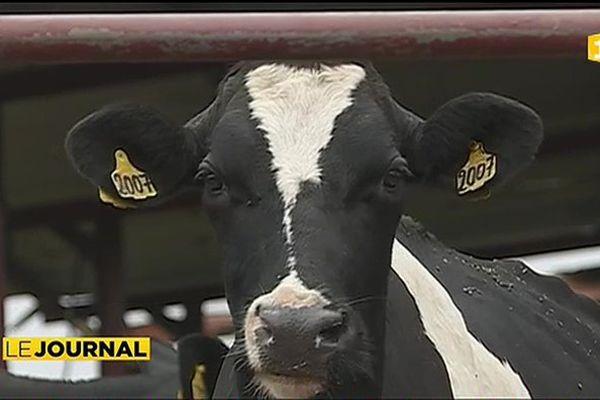 Démarche qualité pour les éleveurs bovins