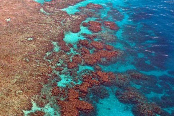 La grande barrière de corail australienne en danger