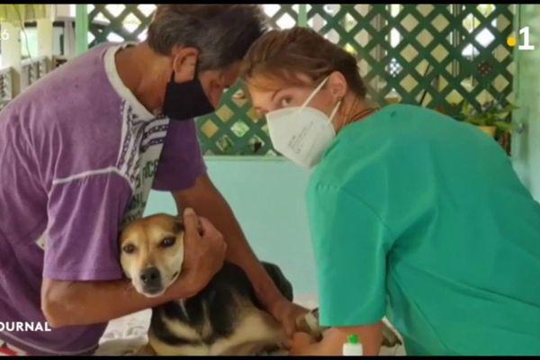 Une vétérinaire bénévole à Rurutu