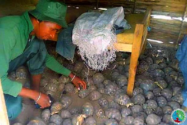 Saisie de tortues radiata février 2021 Madagascar
