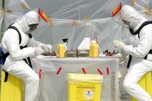 Des chercheurs isolent le virus Ebola. Il s'est propagé, depuis janvier 2014, en Guinée et dans les pays voisins