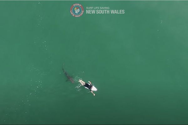Matt Wilkinson frôlé par un requin blanc
