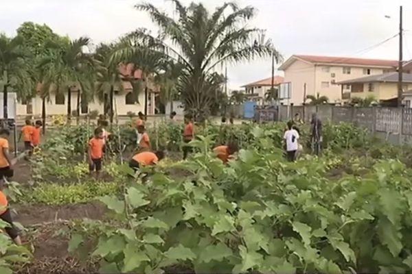 Saint - Laurent : un jardin potager bio à l'école de la Persévérance
