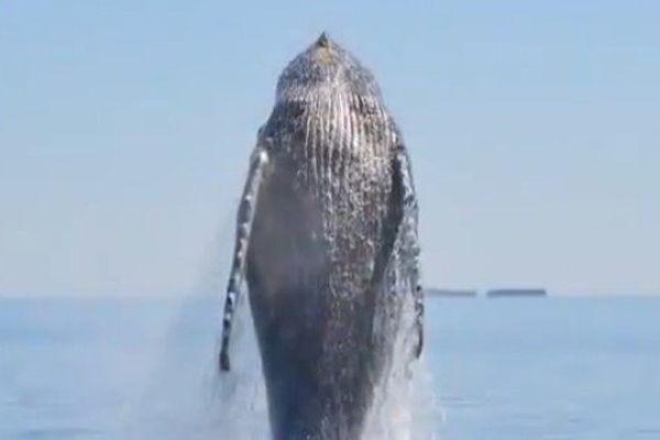 Libre comme une baleine