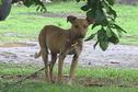 Maltraitance animale : Dobhelp tire la sonnette d'alarme