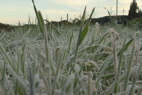 Gelée blanche à la Plaine des Cafres - Givre
