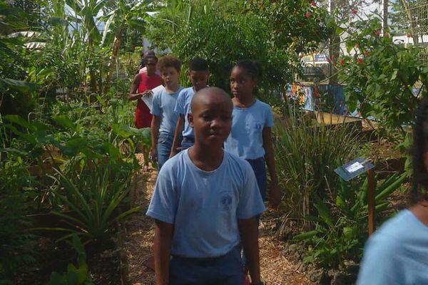 Jardin créole au Collège